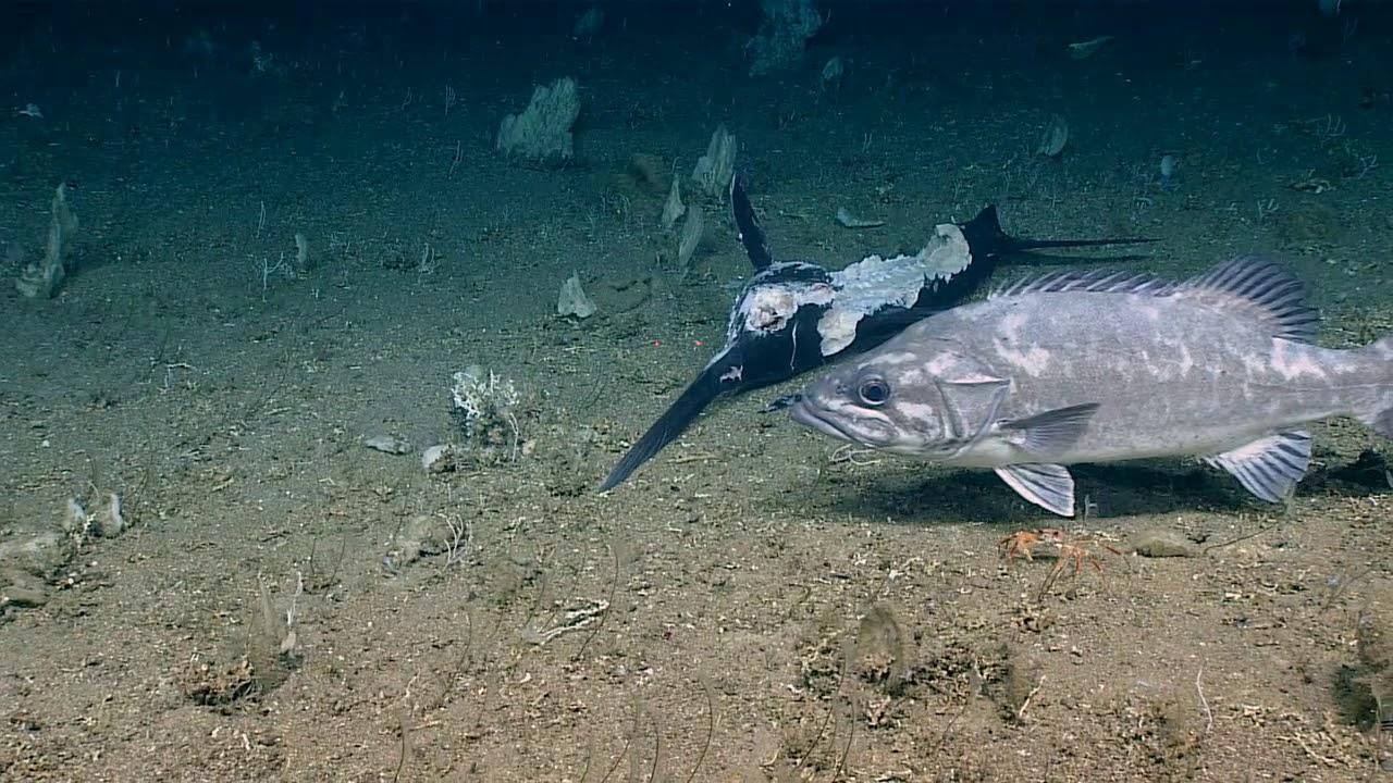 Savannah leads in shark fin exports - News - Savannah