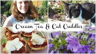 Cream Tea & Cat Cuddles | Jenny E