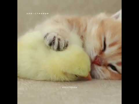 Cute  ?cat's-funny  cat videos???2020
