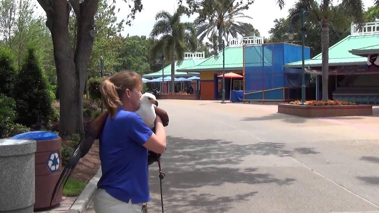 African Fish Eagle - SeaWorld Orlando