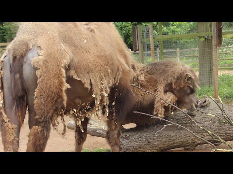HD My Trip to ZSL London Zoo, 7th May 2017