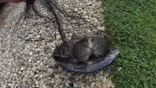 видео Платная и бесплатная рыбалка на Новой Риге