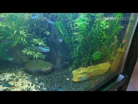 Tips Memelihara Udang Hias Dalam Aquarium Youtube