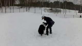 今年初の雪遊びです。 父ちゃん遊ぼうがしつこすぎて、父ちゃんの怒られ...