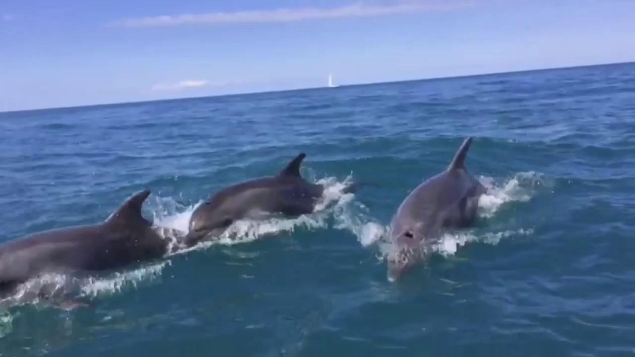 Дельфины в Чёрном море! - YouTube