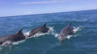 видео Дельфины Черного моря