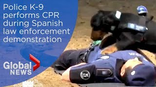 Madrid police dog gives CPR