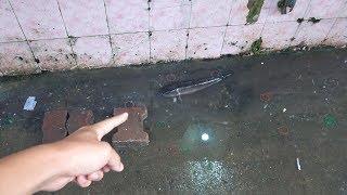 衛生的に無理。ドブを泳ぐ雷魚と、それを売ろうとするおばちゃん。