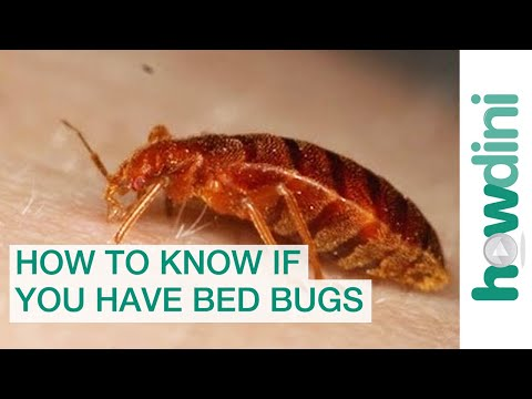 How To Find Bed Bugs - How To Know If You Have Bed Bugs - YouTube