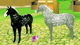 Broken Leg? Horse World New Percheron Horses ! Let's Play Roblox