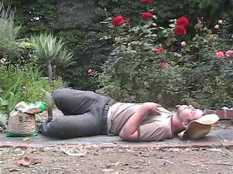 Gardening on Salvia