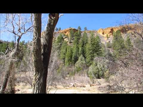 Woman has Bigfoot Sighting in Panguitch