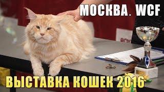 Выставка кошек WCF: Клуб любителей кошек (г. Москва. 9 - 10 апреля 2016)