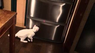 レーザー猫じゃらし