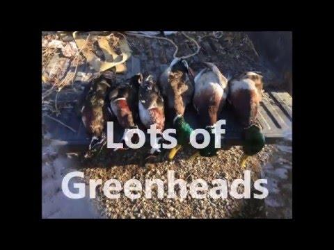 387 Ac Tensas Parish Louisiana Deer & Duck Hunting Land For Sale  Www.RecLand.net