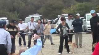 平成21年11月1日撮影 This film taken 2009/11/01.