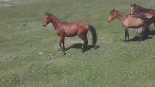 Драка лошадей 1