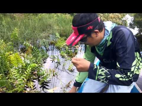 Parupuk with Hermansyah (Borneo Pancing)