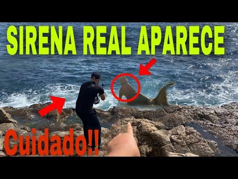 Download Graban a Sirena real APARECE POR PRIMERA VEZ Captada en pleno día con laguna negra