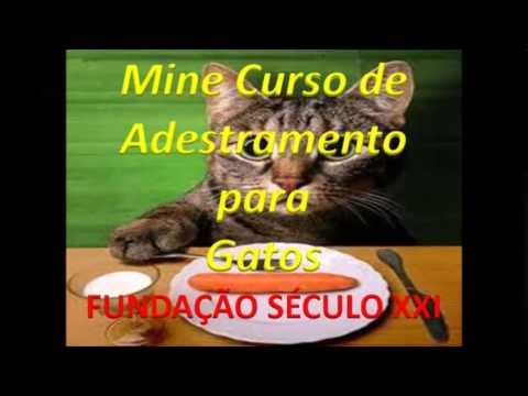 Vídeo Buzzero cursos gratis educação infantil
