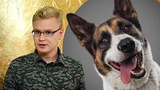 Съемка собак для приюта + обработка