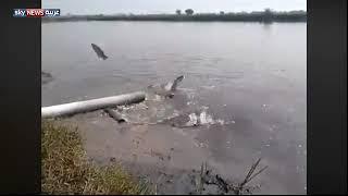 فيديو.. نفوق عشرات آلاف الأطنان من الأسماك بنهري دجلة والفرات