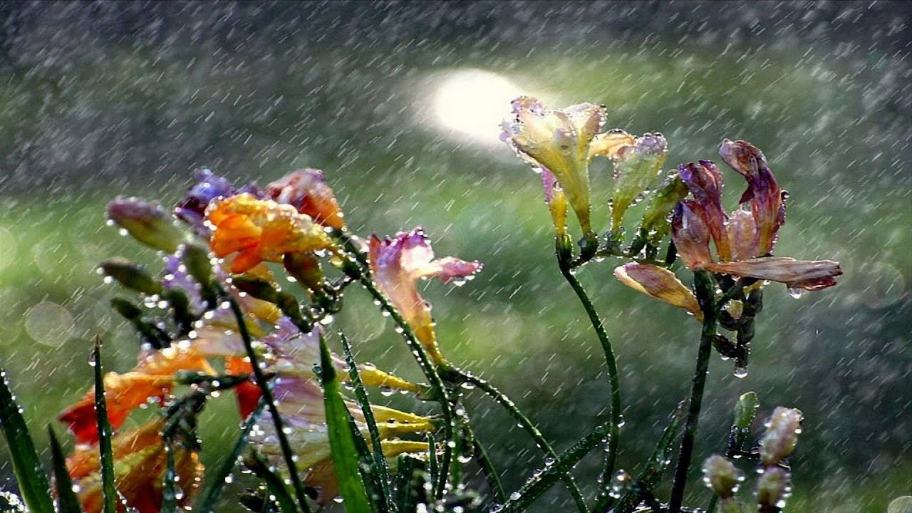 Beautiful Rainy Day An Ultimate Experience