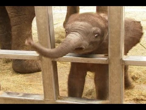 Baby Elephant Charms French Zoo Visitors