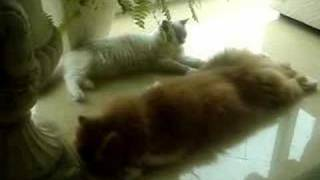 Copy cat thumbnail