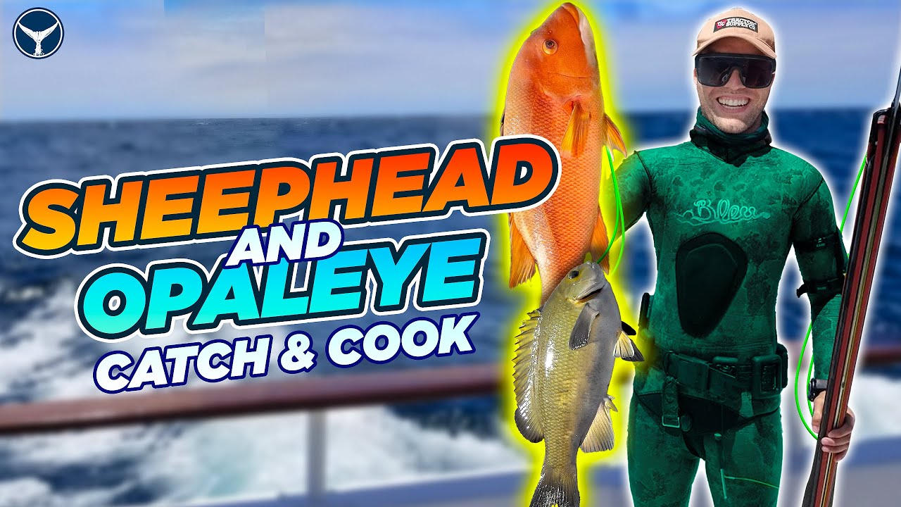 Spearfishing California: 21 Fish Worth Hunting and How to