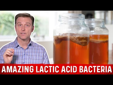 The Amazing Lactic Acid Bacteria