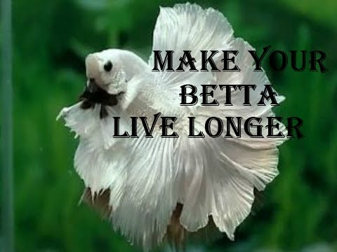 HOW TO MAKE YOUR BETTA FISH LIVE LONGER 2017