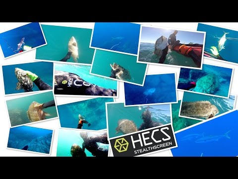 Spearfishing With HECS! Pole Spear Kill Shot Compilation -- Watch In HD