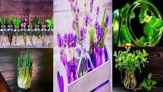 видео Какие цветы лучше посадить в саду и на даче: варианты для разных случаев