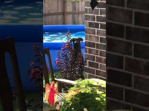 Kathy Lee - Dog Caught Playing In Pool
