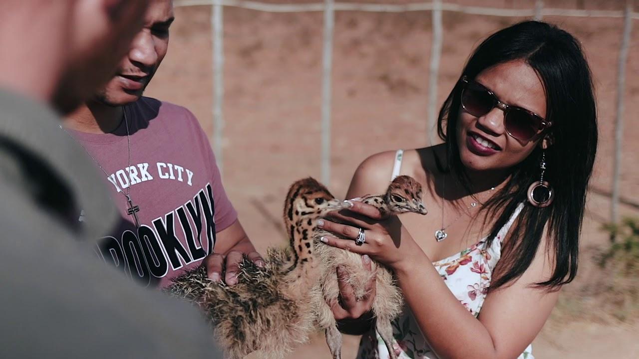 Ostrich Encounter De Opstal Activities Oudtshoorn Klein Karoo Garden Route South Africa