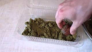 Как вырастить грецкий орех сеянец (1 часть)(Моя страница ВКонтакте: https://vk.com/brybak Сразу хочу сказать, что это самый геморойный метод выращивания сенцев..., 2016-02-03T17:57:13.000Z)