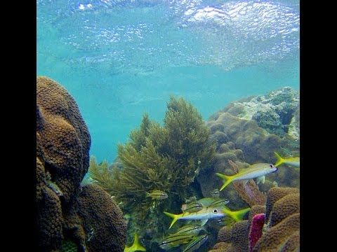 U.S. DIVE TRAVEL snorkeling vacations - Dunbar Villa, Guanaj