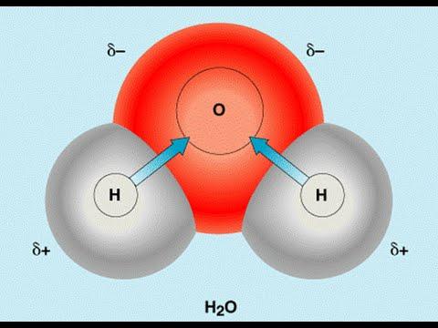 биохимия - гликолиз и глюконеогенез