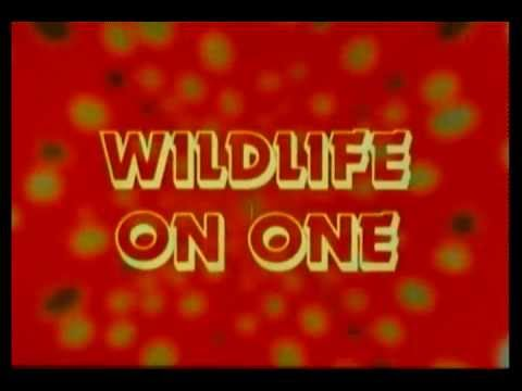 BBC Wildlife on One 1980s Opening Titles