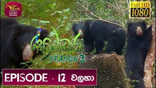 Sobadhara - Sri Lanka Wildlife Documentary| 2019-06-07 | Bear | වලහා Thumbnail