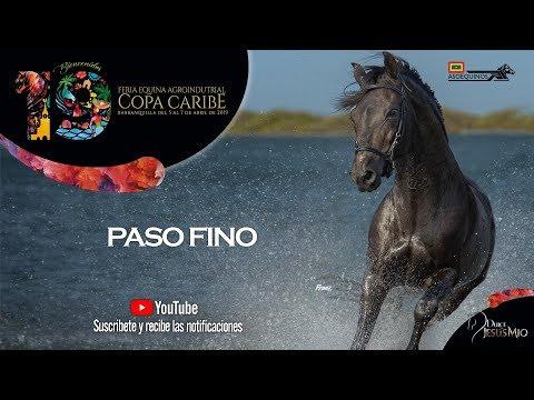 CABALLOS 60-78 -   PASO FINO - COPA CARIBE BARRANQUILLA 2019