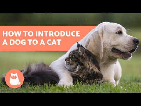 How to Introduce a Dog to a Cat - In 5 Easy Steps!