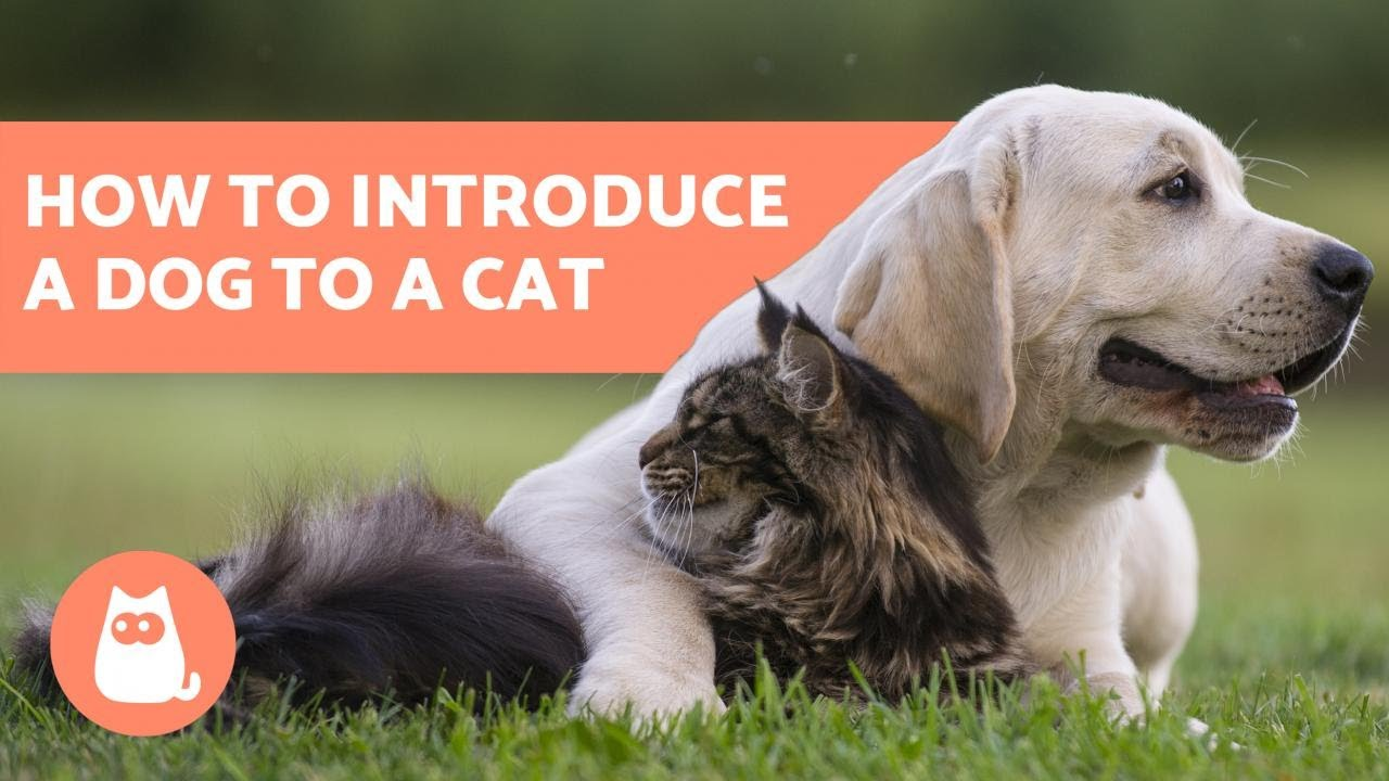 How To Introduce A Cat To A Dog House