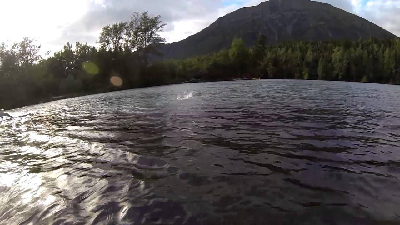 Alaskan salmon kenai russian river underwater video for Kenai river fish counts