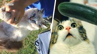 10 cosas sorprendentes que no sabías de los gatos