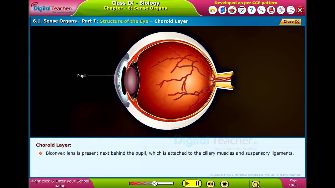 3k In Miles >> Structure of Eye - Choroid Layer, Class 9 Biology ...