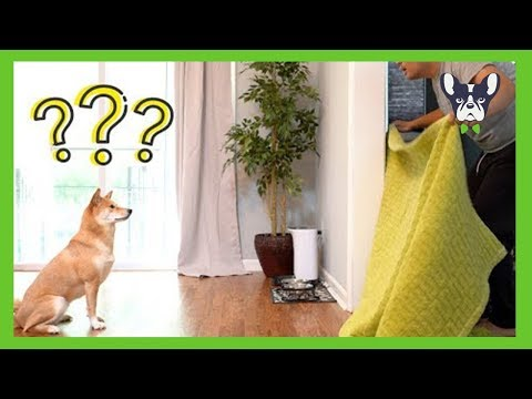what-the-fluff-challenge-compilation-(2018)---funny-dogs-videos