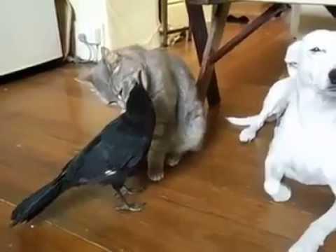 przyjaźń kota, psa i ptaka
