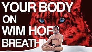 Control your Breath, Control your Body (Wim Hof Explained)